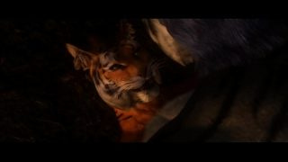 Skyrim khajit sex with tiger SFM